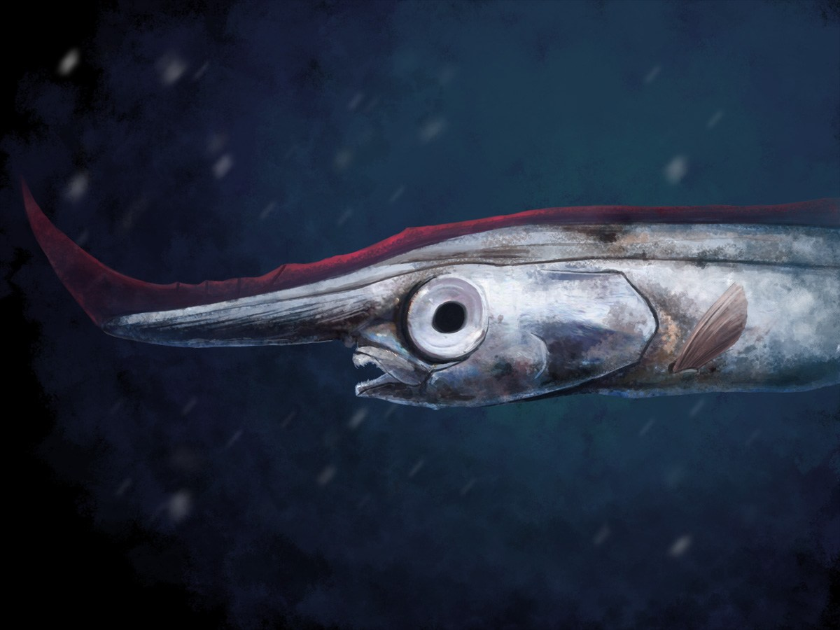 A bare bones look at bizarre fish earth archives for Fish without bones