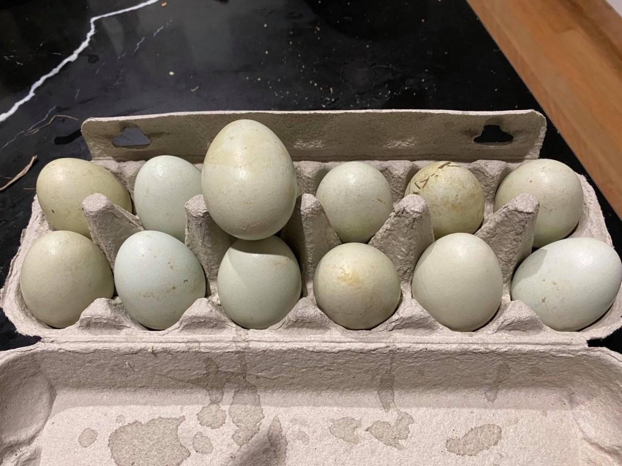 cream-legbar-eggs_original