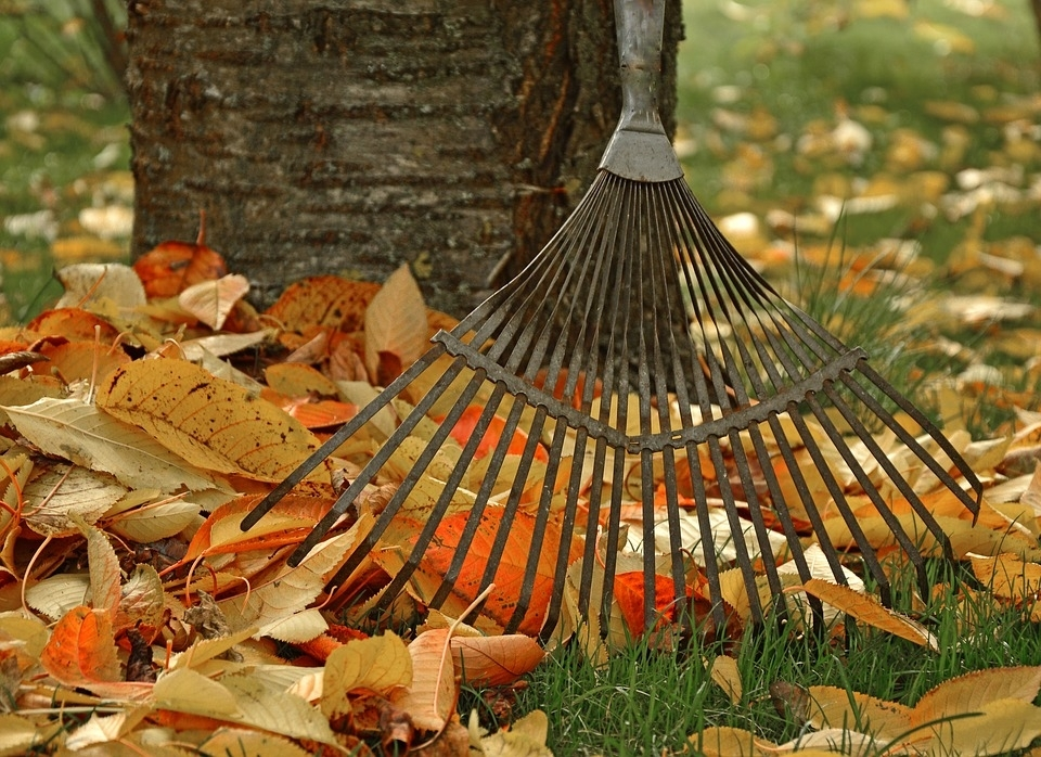 Raking Leaves - Raking Leaves Gardening Garden Tool Computing