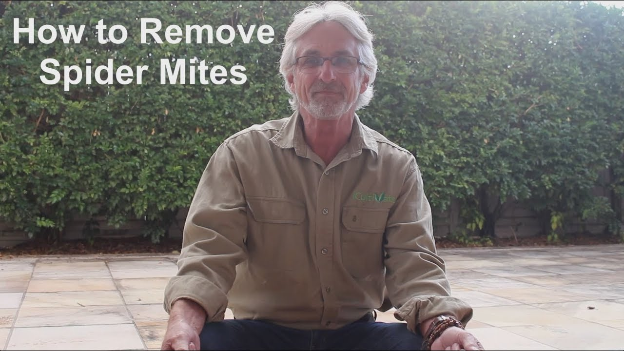 How to Remove Spider Mites