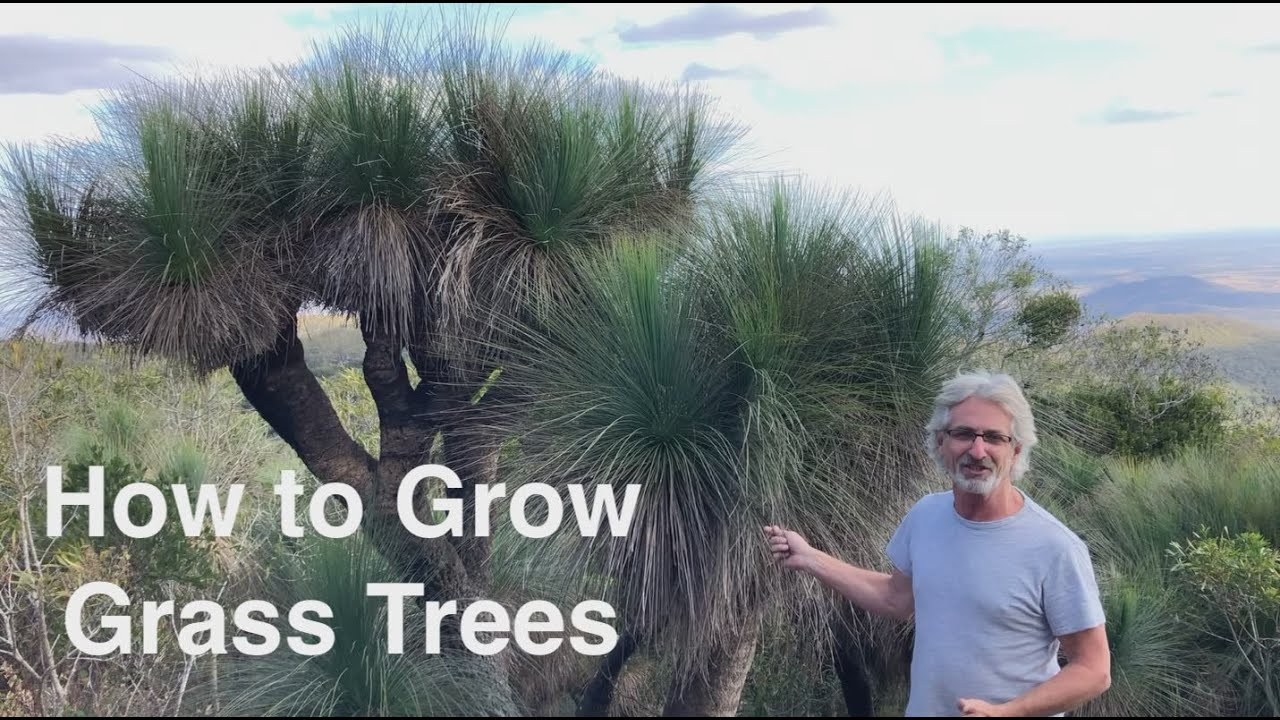 How to Grow Grass Trees
