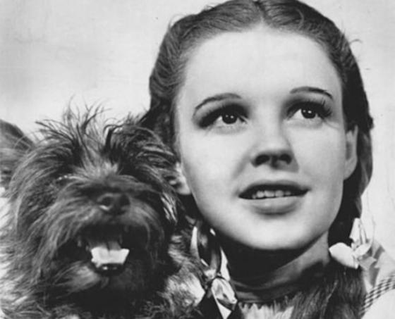 Dorothy large header