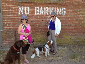 @mizstarryeyed @c8nhogarth + dogs <span>&copy;  </span>