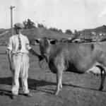 Ted Gleason & His Jersey Cow, Marin County Fair, Novato, August 22, 1926