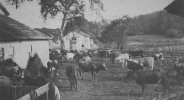The Shafter ranch corral, where the cow-in-the-crack incident supposedly occurred. <span>&copy; Jack Mason Museum </span>