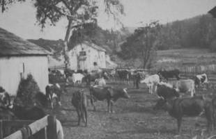 The Shafter ranch corral, where the cow-in-the-crack incident supposedly occurred.