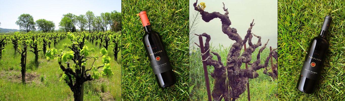 Predator Wine Images