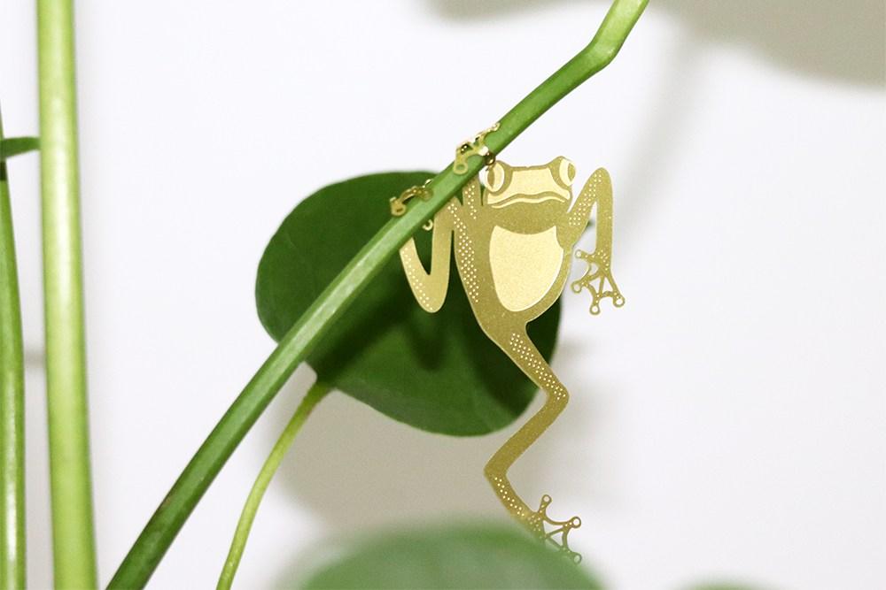 Plant Animal Grenouille - Plant Animal Grenouille
