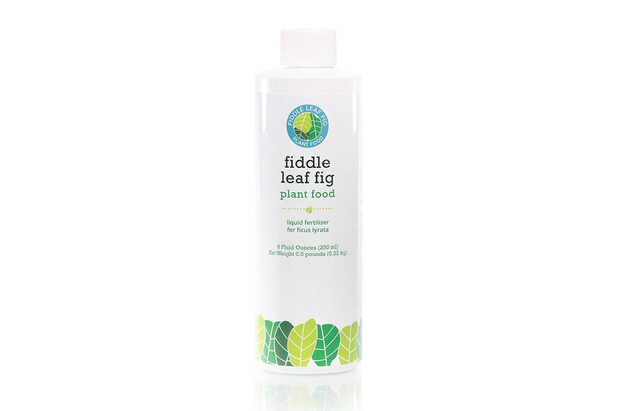 Fiddle Leaf Fig Fertilizer - Fiddle Leaf Fig Fertilizer