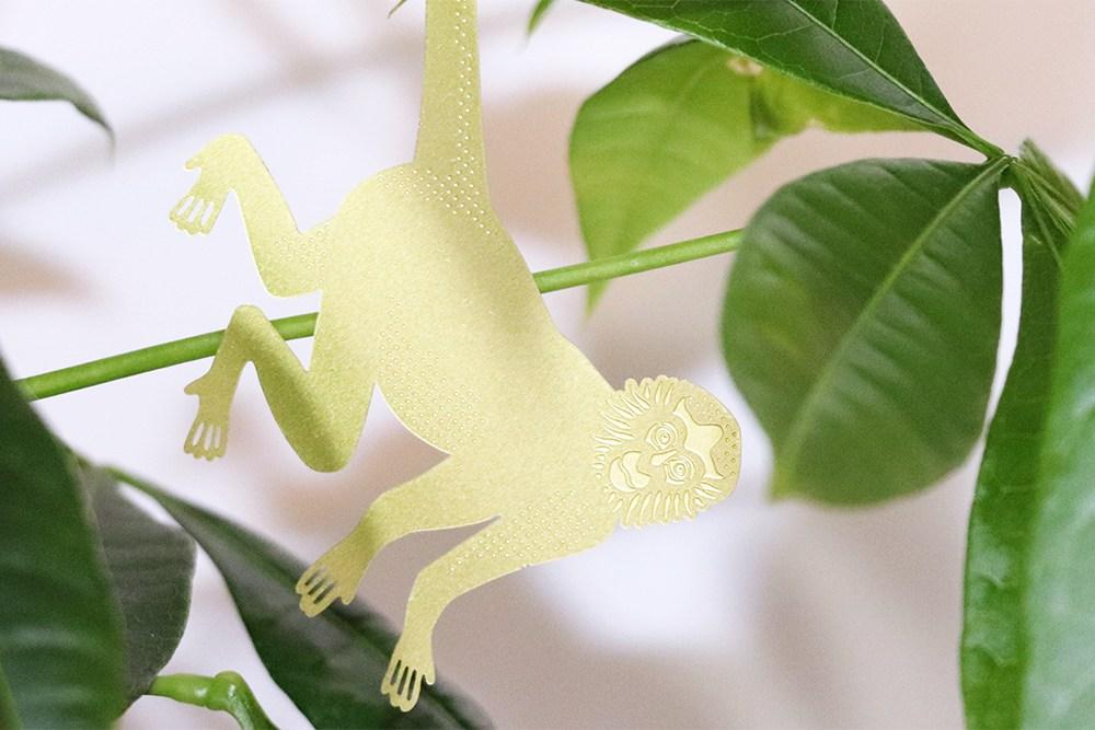 Plant Animal Singe-araignée - alt
