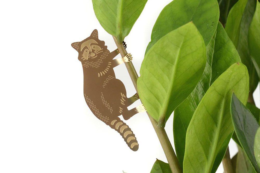 Plant Animal Raton laveur - alt