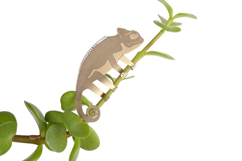 Plant Animal Caméléon - alt