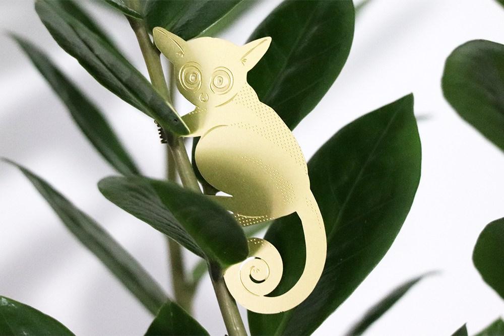 Plant Animal Galago  - alt