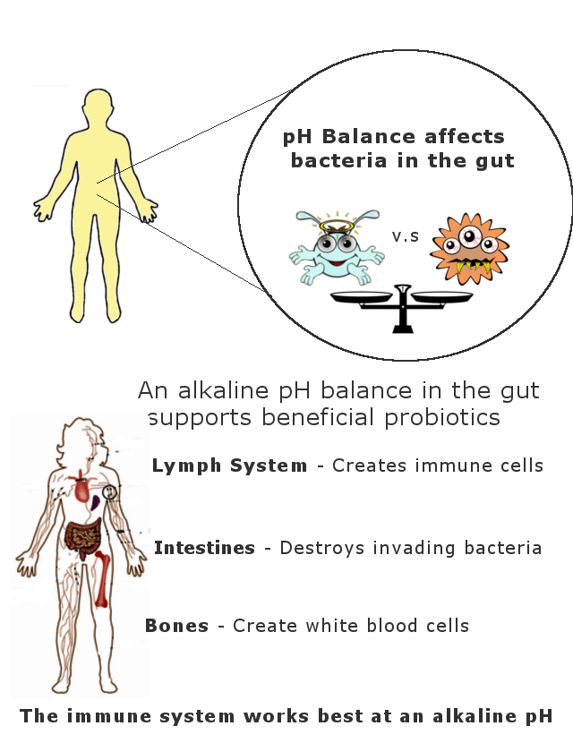 How pH balance affects your immune system infographic
