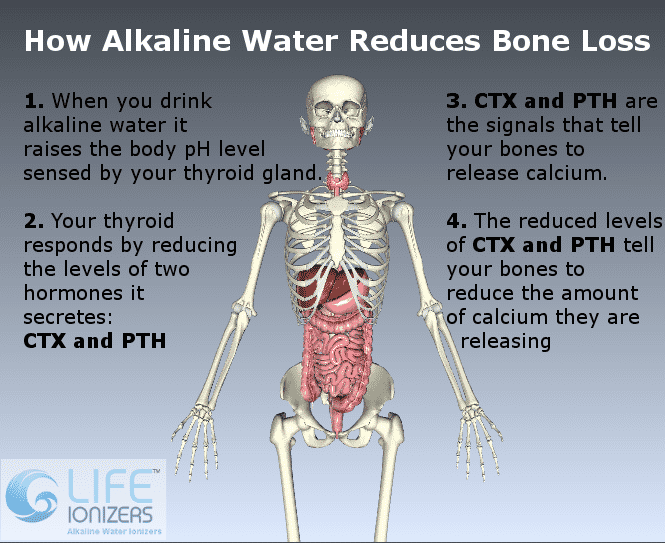 how alkaline water prevents bone loss infographic