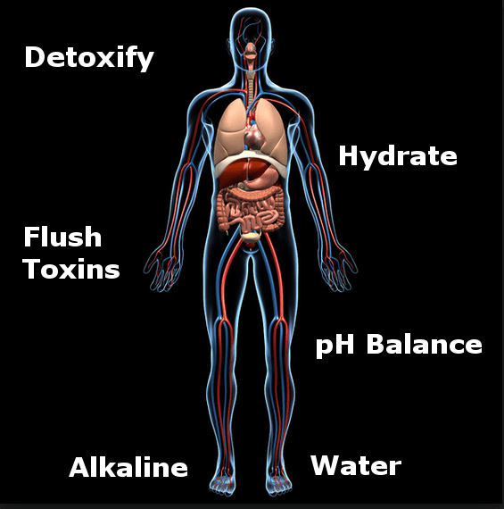 alkaline water detoxification infographic