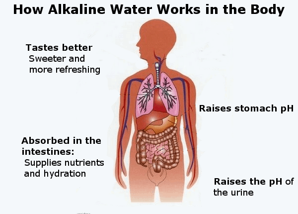 alkaline water in the body infographic