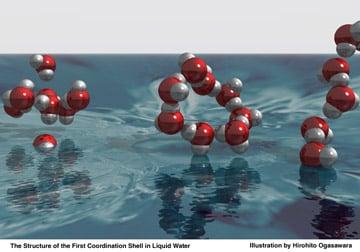 water molecule hydrogen bonding image