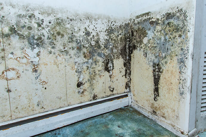 Mold Damage: Mold Removal & Mold Remediaton