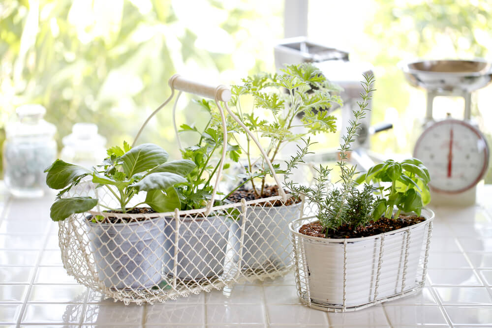 Herbs are a great way to combine two hobbies: cooking, and growing things.