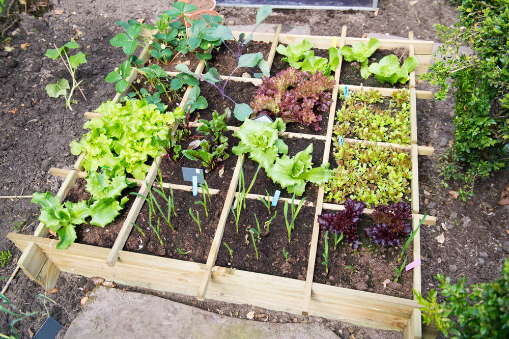 Planning a vegetable garden ahead of time that will last a lifetime is worth the investment.