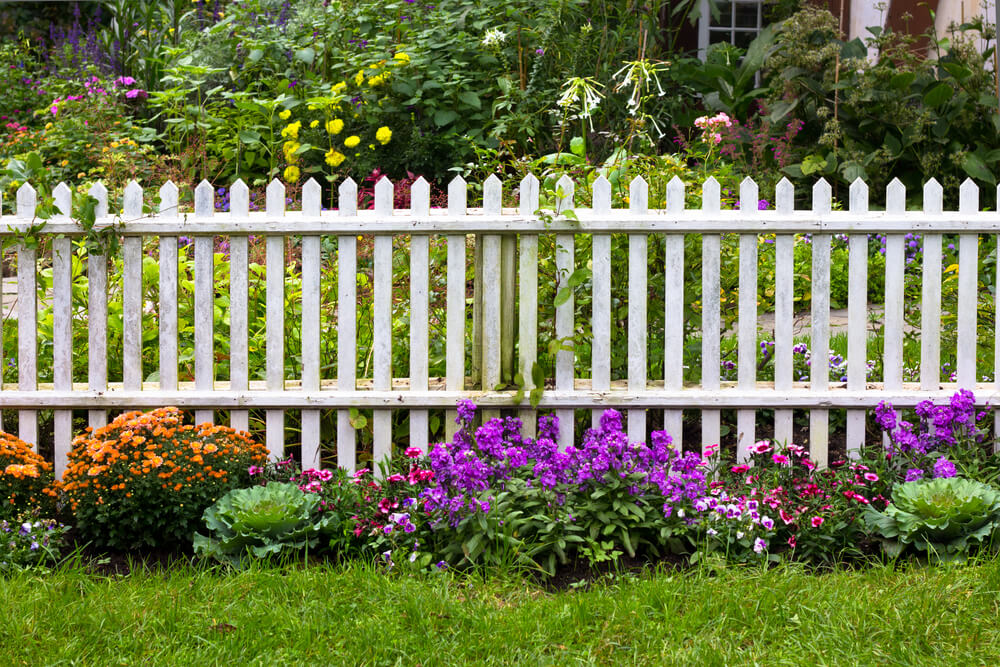 White picket fences look beautiful surrounded by greenery and flowers. Backyard fence ideas.