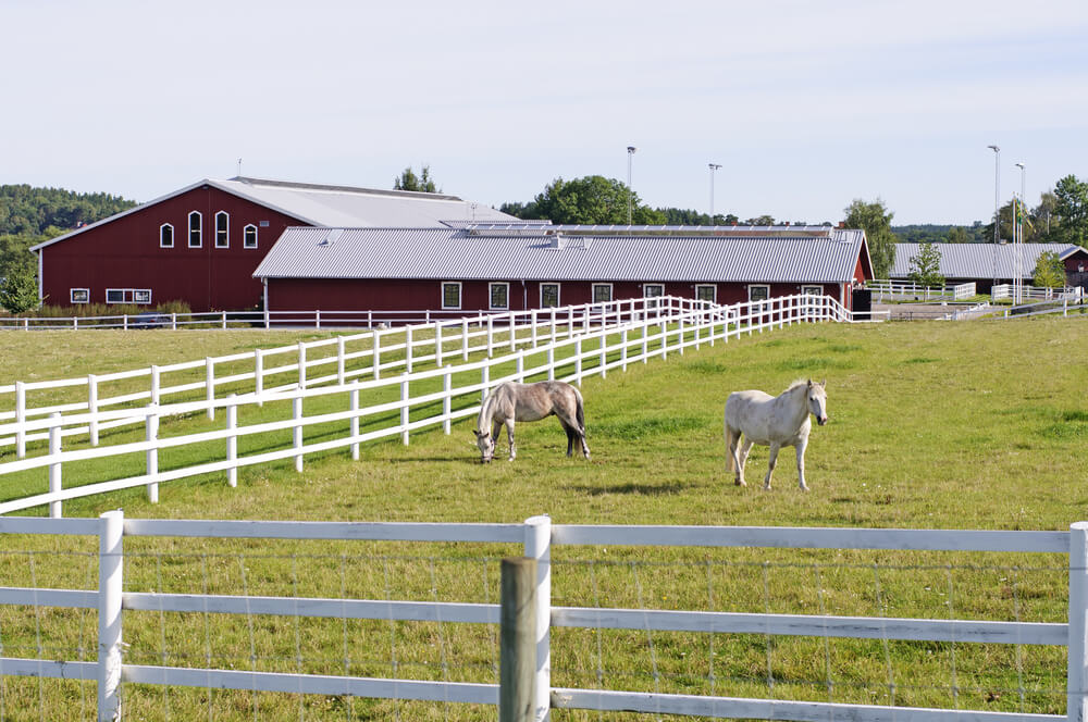 A standard farm fence painted white with wire mesh attached for extra control.