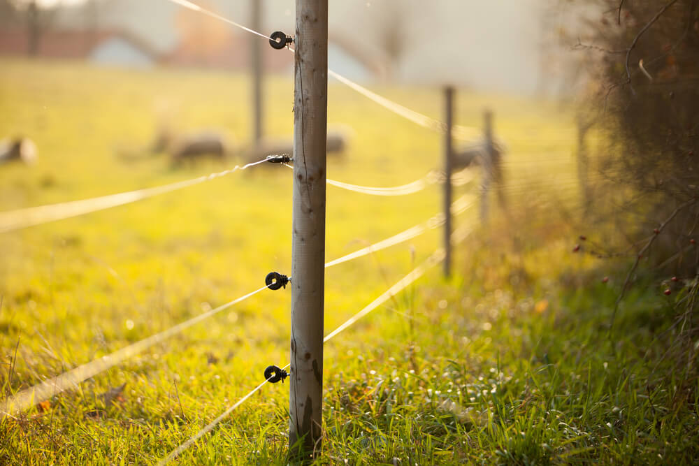 Fence posts are laid out with the electric fence wire attached to the posts. The electric wire is ground on one with an earth rod.