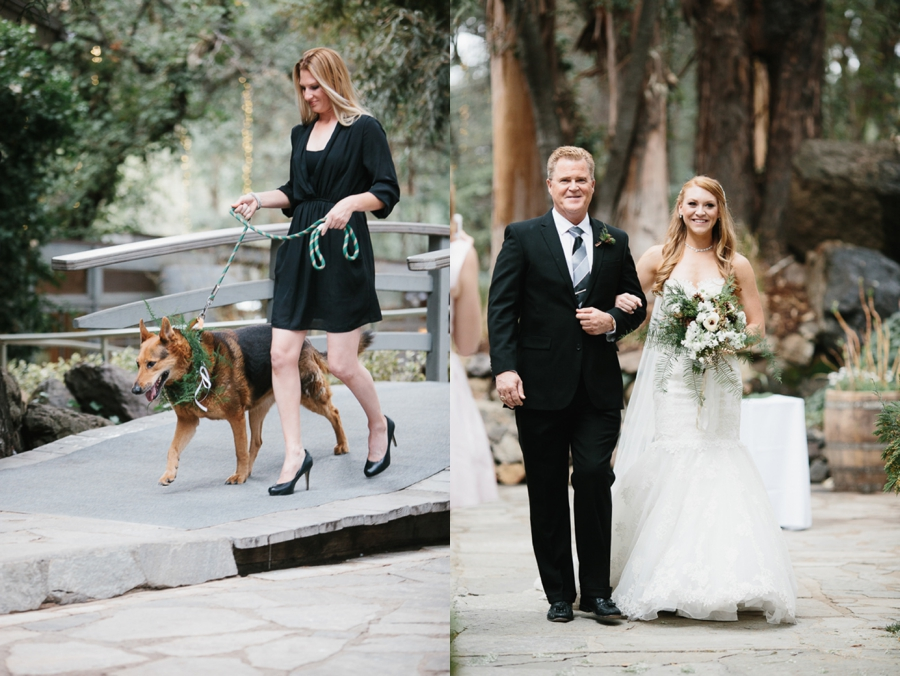 dog ring bearer with evergreen collar, father in black walking bride in strapless lace gown down the aisle evergreen and white bouquet