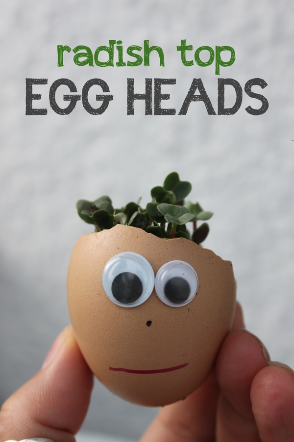 Radish Top Egg Heads | Mama Papa Bubba