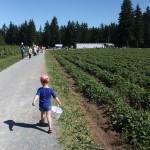 Strawberry Fields {A Visit to Krause Berry Farms}