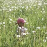 In a Field of Dandelion Puffs