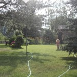 Sunshine & Sprinklers