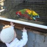 Maplewood Farm Visit