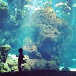 iPhoneography // The Aquarium