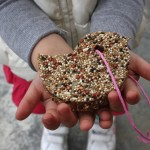 Bird Seed Cookies {for the birds, obviously}