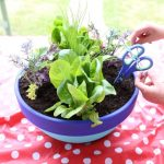 Potted Salad Garden Gift