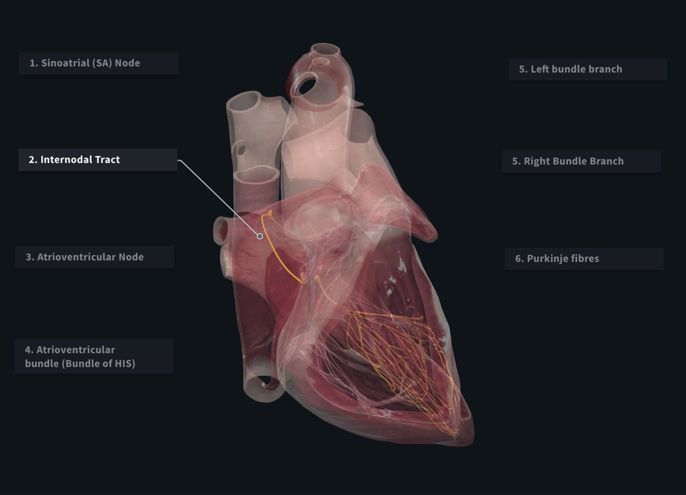 Complete Anatomy – 3D4Medical
