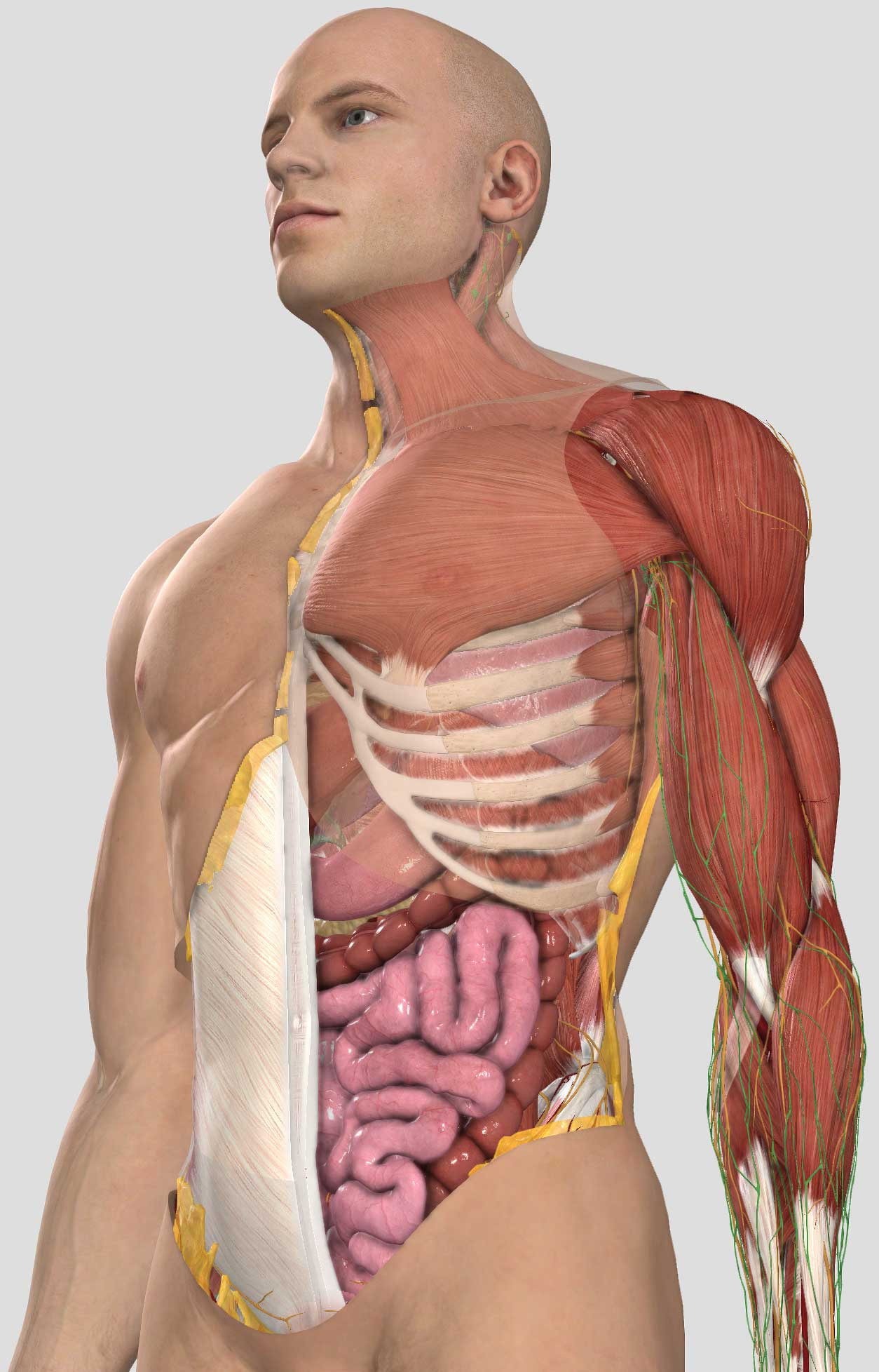 Complete Anatomy For Mobile 3d4medical