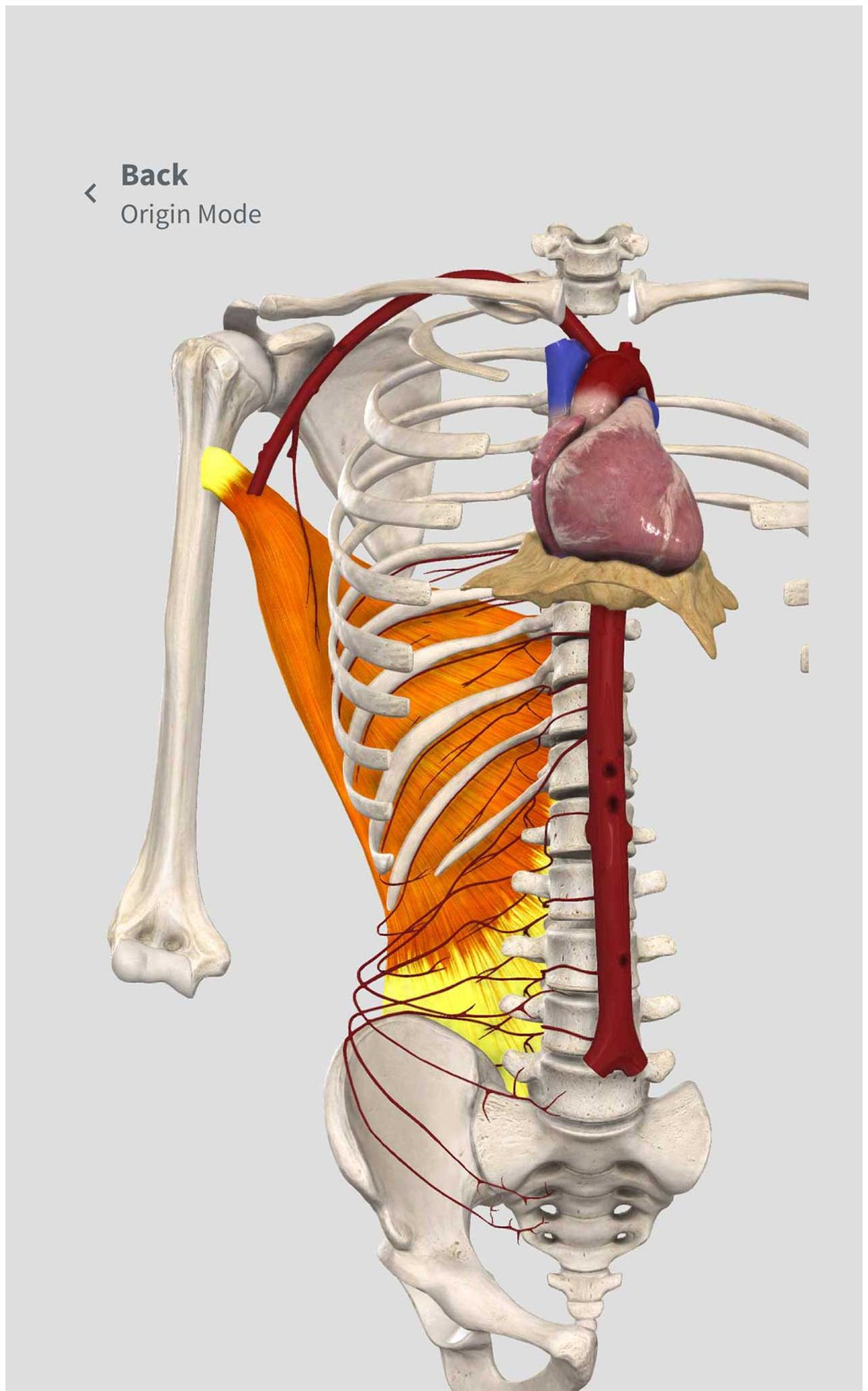 Complete Anatomy For Android 3d4medical