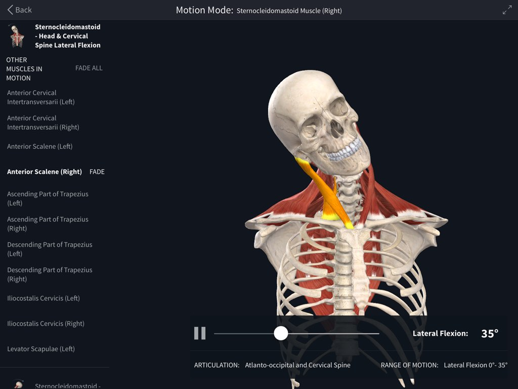 Muscle Motion – Complete Anatomy