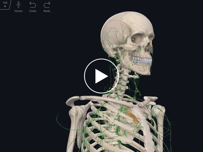 Complete Anatomy – Complete Anatomy