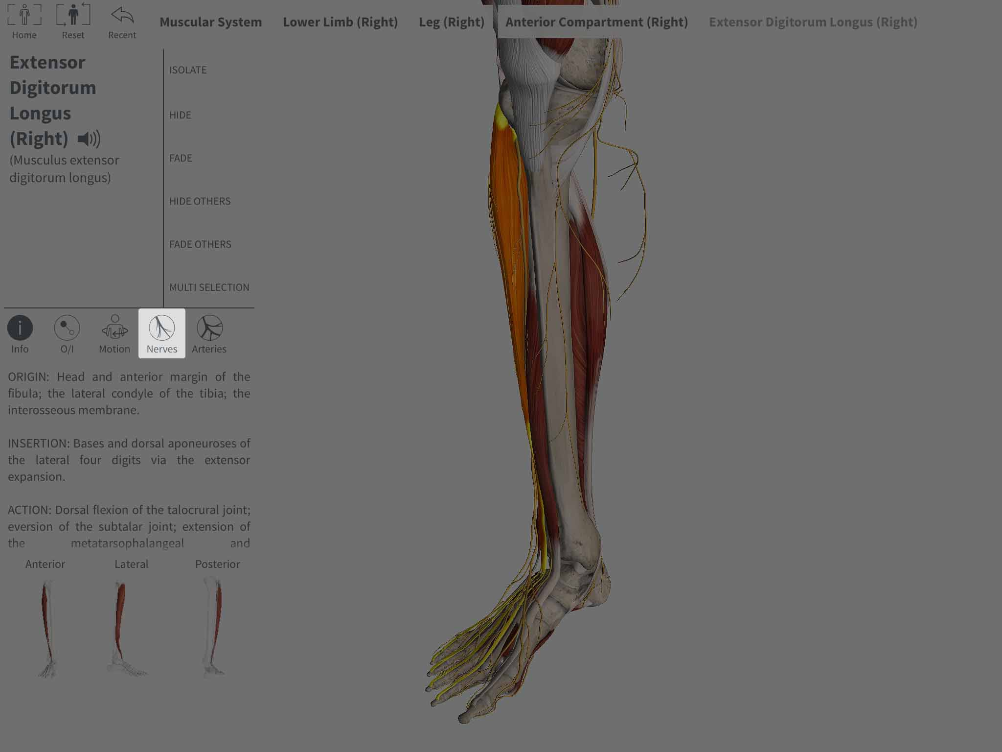 Accessing Innervation