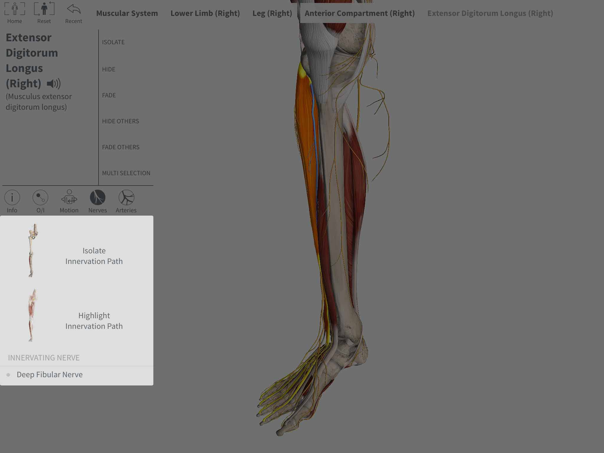 Selecting Innervation