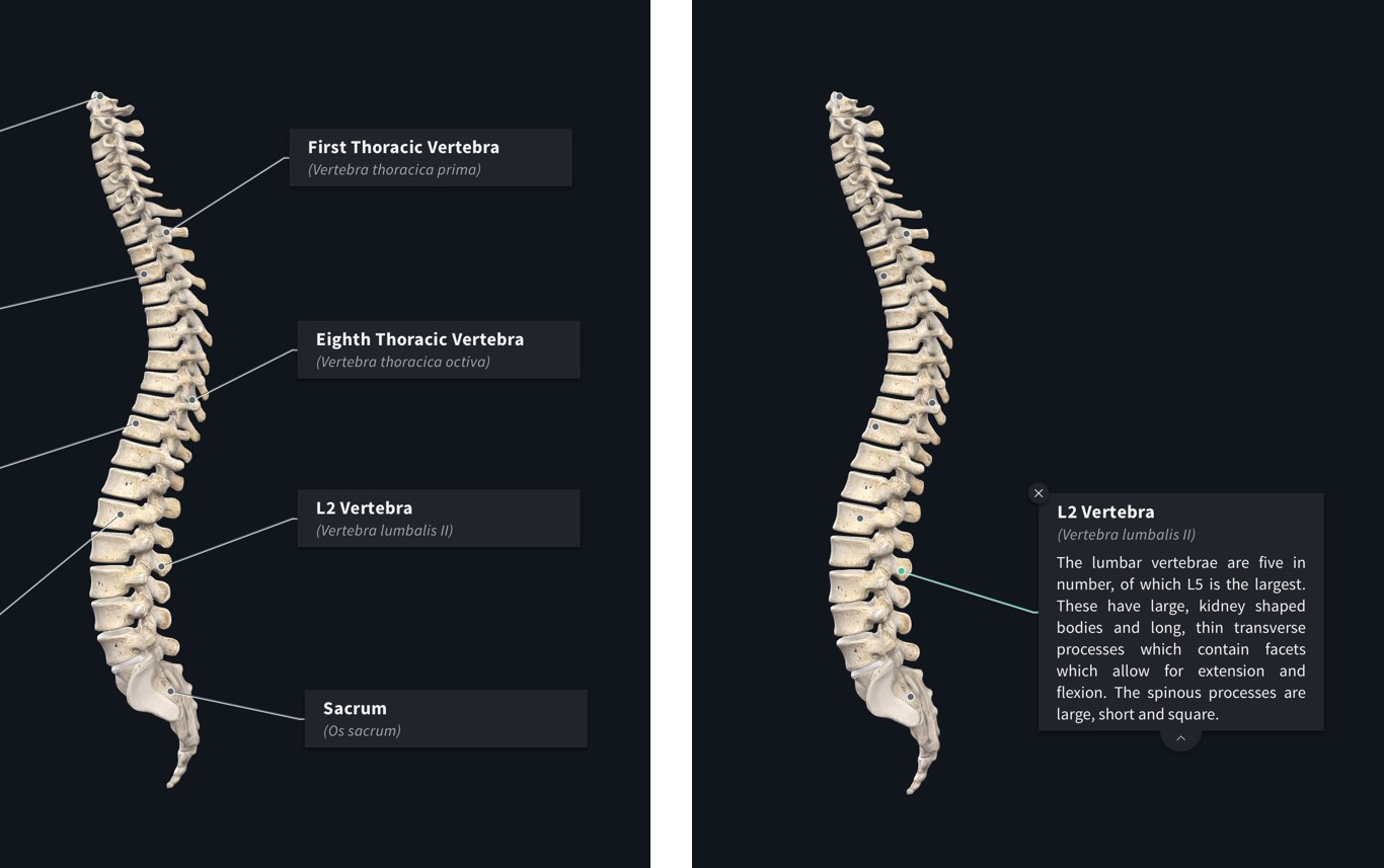 Labels 3d4medical Label The Diagram Below With Bones And Joints You Can Identify View Information