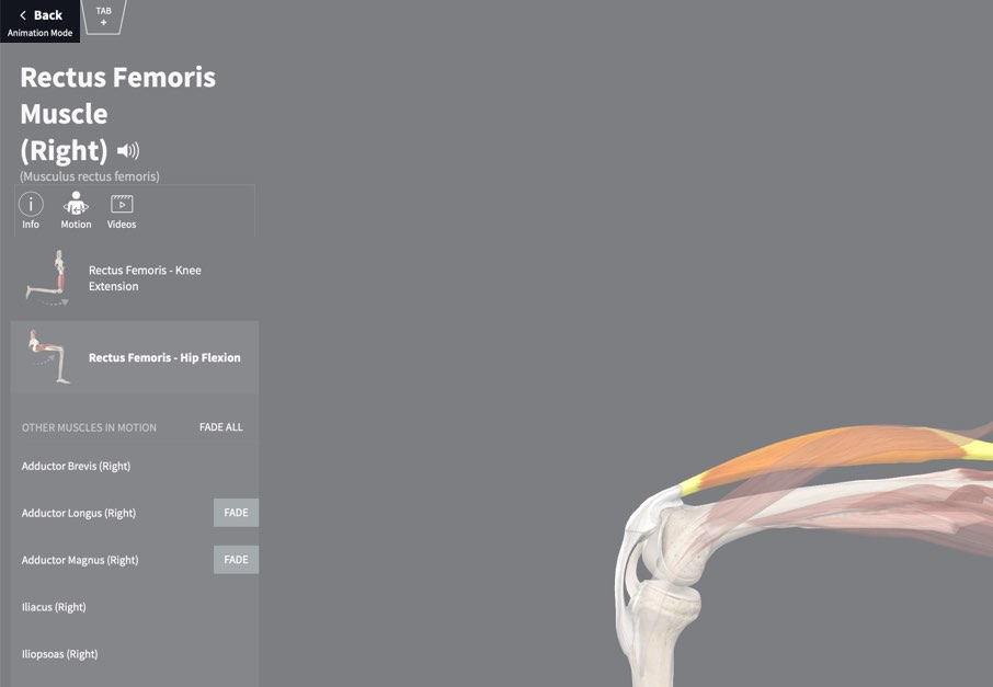 Muscle Motion 3d4medical
