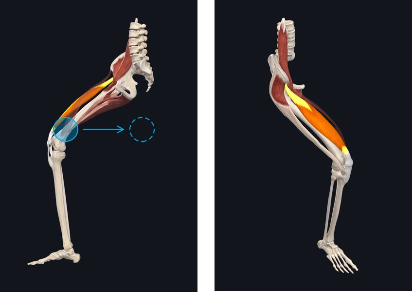 Muscle Motion – 3D4Medical