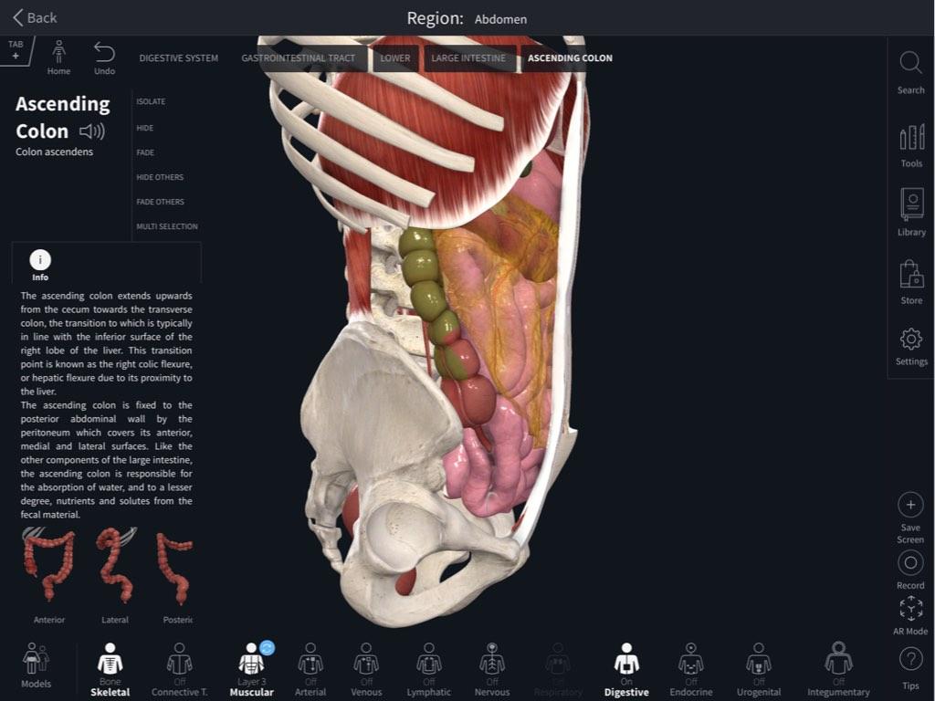 Navigating the Model – 3D4Medical