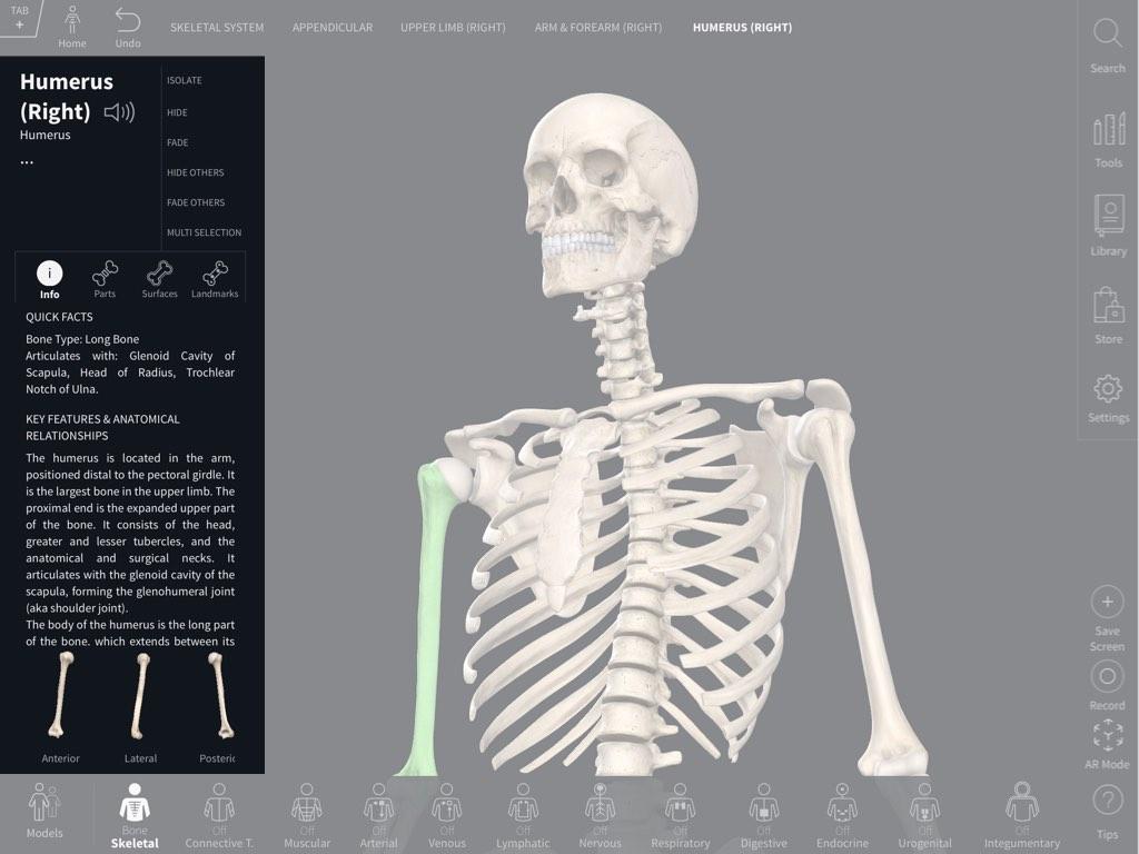 Bone Parts Surfaces Landmarks 3d4medical