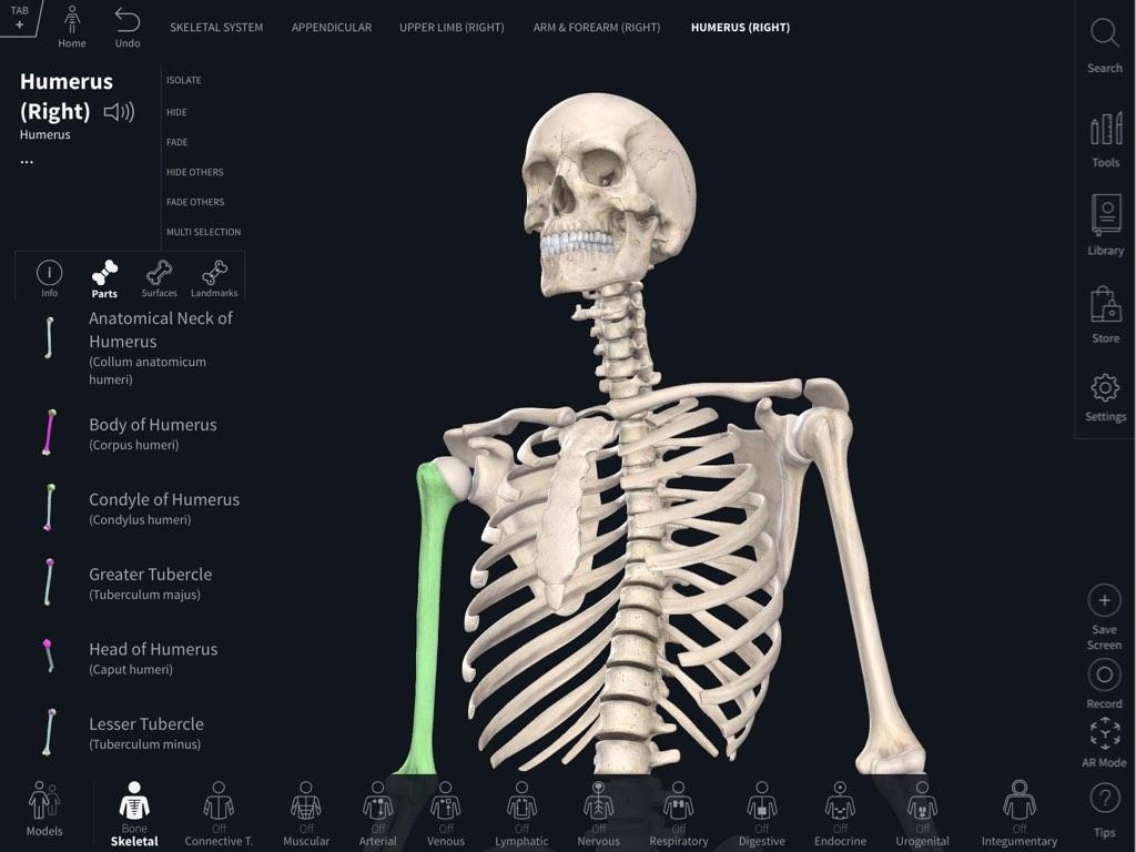Bone Parts, Surfaces & Landmarks – 3D4Medical
